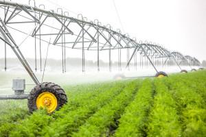 Развитие аграрного сектора, основные перспективы