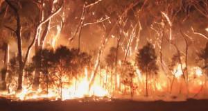 Территории, где распространились самые сильные очаги пожаров в Австралии