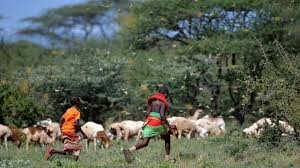 Ситуация с нашествием саранчи в Восточной Африке не контролируется